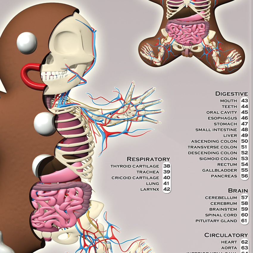 Jason Freeny Art Print Gingerbread Man Dissected 1xrun