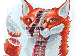Art by Nychos - Dissection of a Fox - Framed