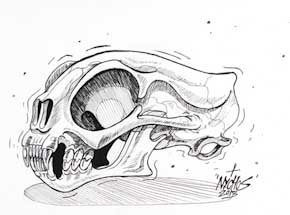 Original Art by Nychos - Cat Skull - Ink Drawing