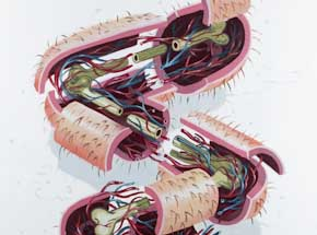 Original Art by Nychos - Dissection Of The Letter S