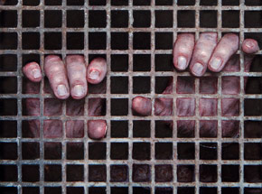 Art Print by Dan Witz - Sanctuary Is It Safe