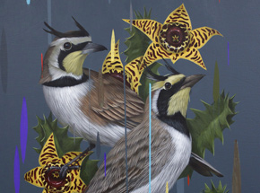 Original Art by Frank Gonzales - Horned Larks and Huernia Zebrina