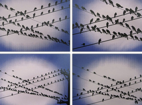 Art Print by Jim Pasant - Birds On A Wire - Set of 4
