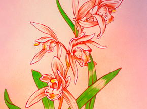 Original Art by Ouizi - The Noble Orchid Of Spring